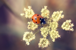 Ladybug - alla mia maniera